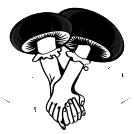 Medico Mushroom